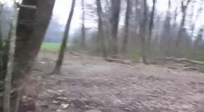 Привет из лес приходит новый год