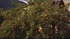 Влколинец. Деревянная земле волков