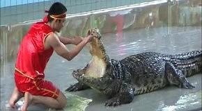 Паттайский усмиритель крокодилов