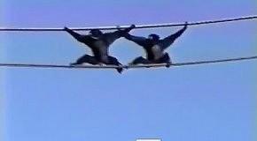 Синхронное движение обезьян