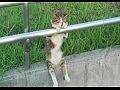 Кот мечтает сидя на бордюре
