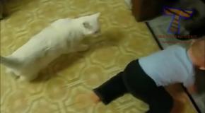 Смешные кошки и дети, играющие вместе