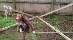 Пес балансирует на канате!!!