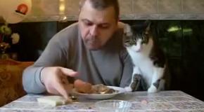 Кот пытаеться отнять сосиску у хозяина