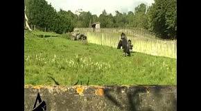 Прямоходящая горилла