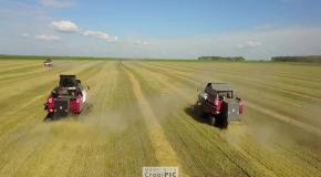 Гусеничный зерноуборочный комбайн VECTOR 450