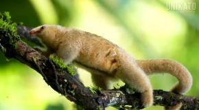 10 редких и необычных животных планеты Земля