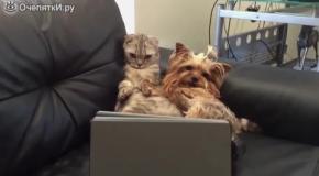 Кот и пёс смотрят кино