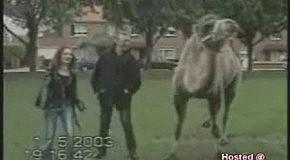 Танцы животных)))))))
