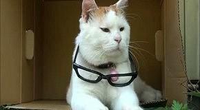 Сонный кот в очках
