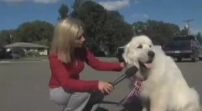 В США мэром поселка избрали пса