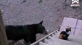 Бесстрашный кот прогнал медведя