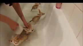 Лисички фенек впервые купаются в ванной