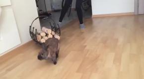 Дрифт кролика