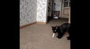 Кот пошел на перекур