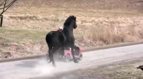 Невероятно красивы конь