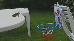 Животные баскетболисты