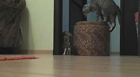 Кот двигает мебель