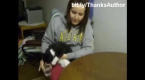 Кошки и вода =))