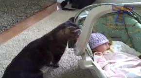 Домашние животные знакомятся с новыми членами семьи.