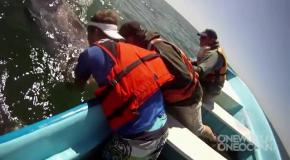 Люди встретили китов в открытом океане