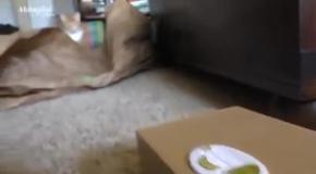Кот в шоке: хозяин, что это было?!