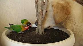 Попугайчики і Аліса