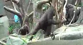 Игры горилл
