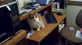 Кот ловит карты