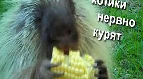 This is Хорошо - Конь Долбак / Dumbag horse