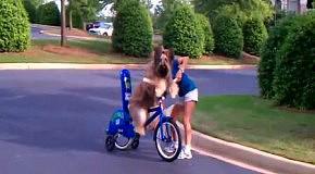 Собака научилась ездить на велосипеде