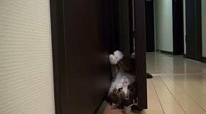 Кот Мару кувыркается