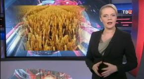 Пшеница с геном скорпиона! ТВЦ