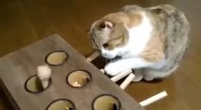 Кот охотится на игрушку