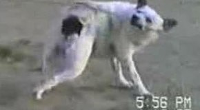 Собака чешет себе спину