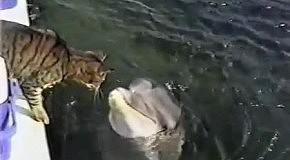 Кошка на борту яхты)