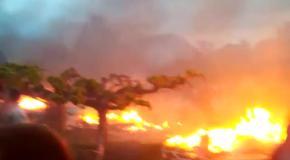 Столкновения в Одессе: Пожар в Доме профсоюзов