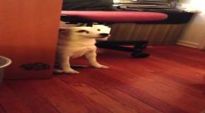 Пес уползает от наказания