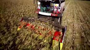 Уборка кукурузы на TORUM 760 в Баварии (Южная Германия)