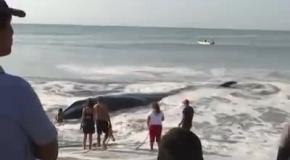 В Мексике отдыхающие спасли кита