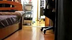 Кот в матрице