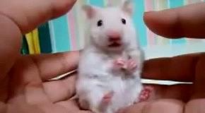 Мышь в ужасе