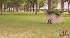 Забавный эксперимент:  Игрушечный пес на охране вкусной косточки
