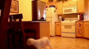 Собаки воришки2