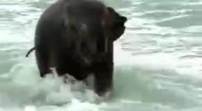Слоненок купается в океане