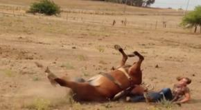 Лошадь сбрасывает наездницу
