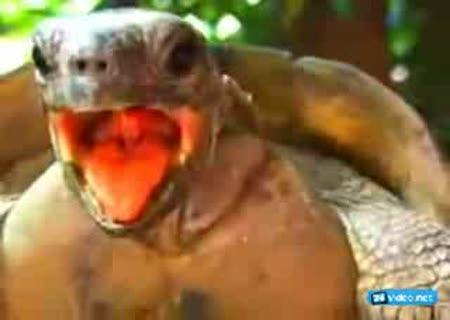 Оргазм черепахи прикол фото 171-436