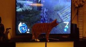 КотЭ в растерянности