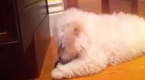 Собака Марка Цукерберга