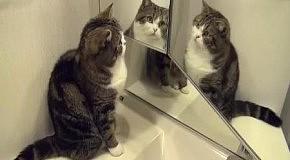 Три кота Мару в одном месте